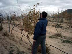 Misura dei gradi Brix nell'uva con il rifrattometro